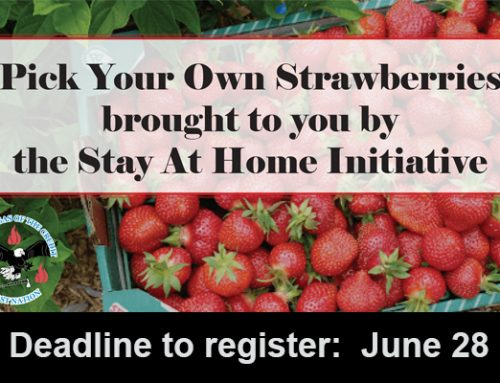 Pick Your Own Strawberries:  Deadline June 28 to Register